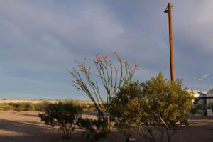Kaktus im Abendlicht