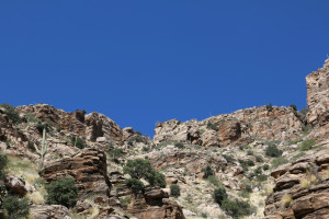 Saguarokakteen auf dem Mount Lemmon