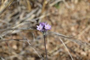 Violette Blumen