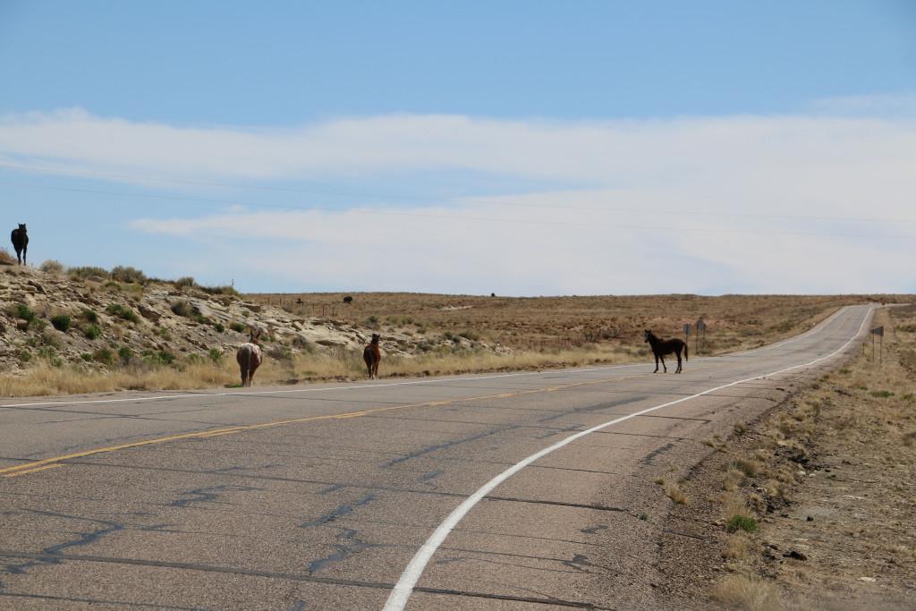 Pferde auf der Strasse