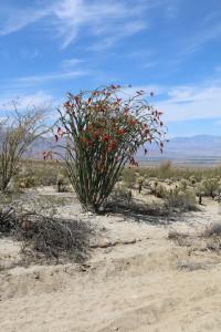 Roter Kaktus