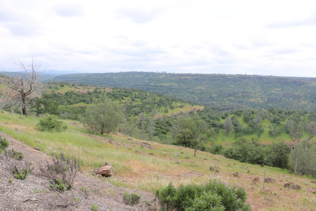 Vulkanische Landschaft 1