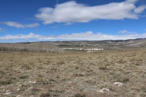 Landschaft mit Birkenwäldchen