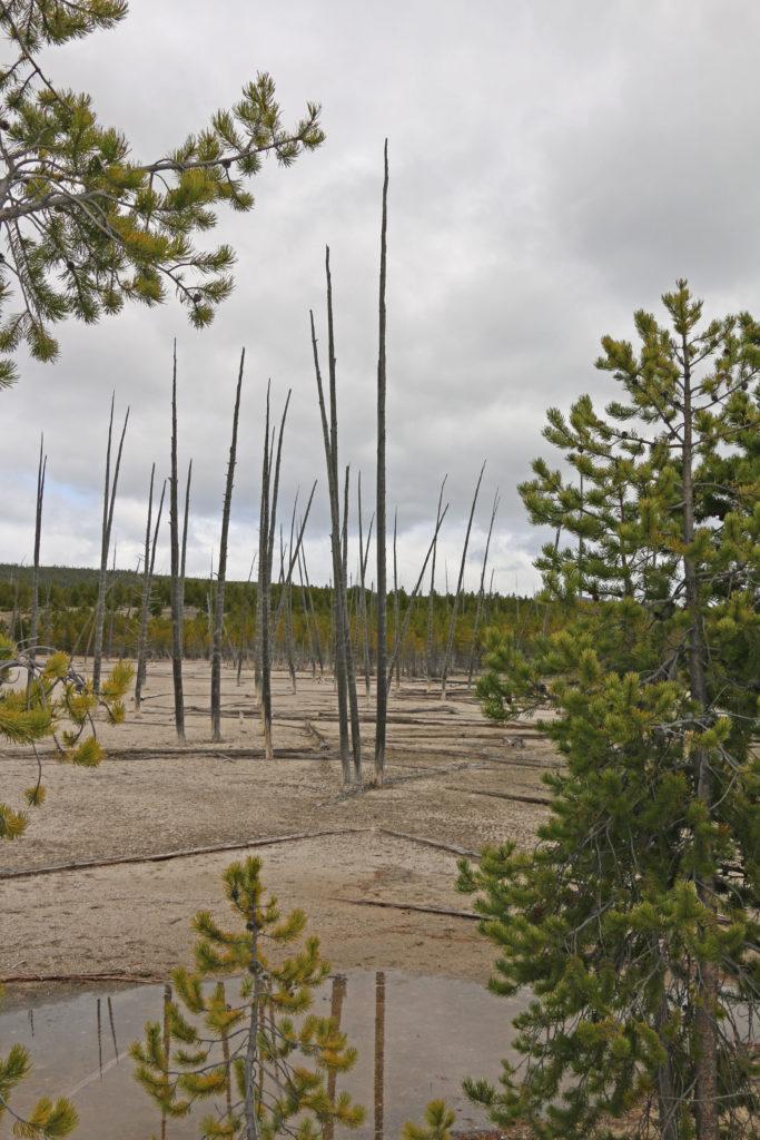 Zerstörte Bäume